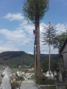 Toaletare molizi in Suceava