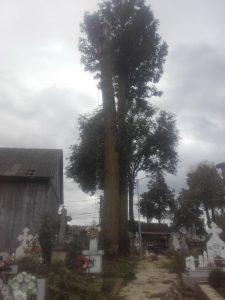 Toaletare copaci in Suceava